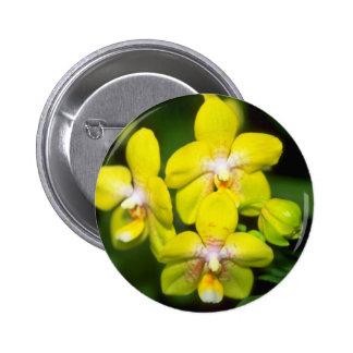 yellow Vanda flowers Button