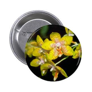 yellow Vanda flowers Pinback Button