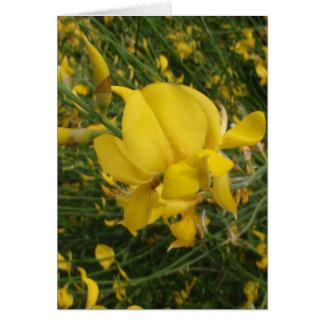 Yellow Vetchling Card