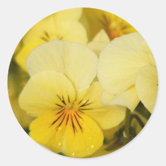 Yellow Violas (Pansies) Round Stickers