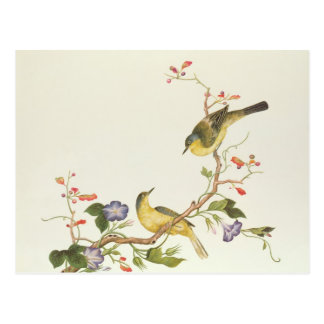 Yellow Wagtail with blue head Postcard