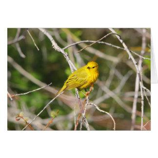 Yellow Warbler 2 Greeting Cards