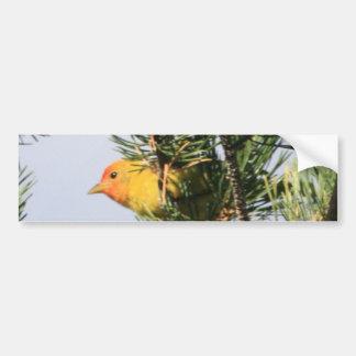 Yellow Warbler Bumper Sticker