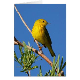 Yellow Warbler Card