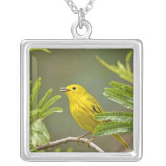 Yellow Warbler Dendroica petechia) adult 2 Silver Plated Necklace