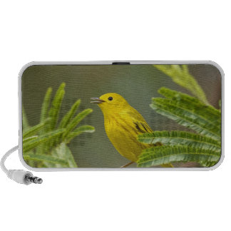 Yellow Warbler Dendroica petechia) adult 2 Speaker System