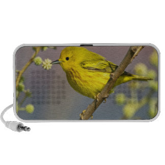 Yellow Warbler Dendroica petechia) adult Mp3 Speakers