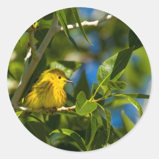 Yellow Warbler In Tree Near Augusta, Montana Classic Round Sticker