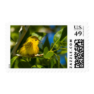 Yellow Warbler In Tree Near Augusta, Montana Postage Stamp