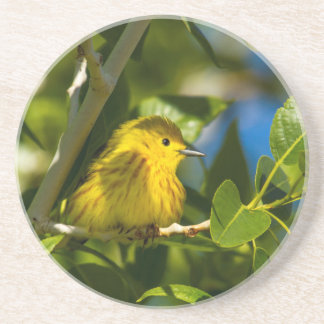 Yellow Warbler In Tree Near Augusta, Montana Sandstone Coaster