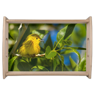Yellow Warbler In Tree Near Augusta, Montana Serving Tray