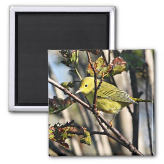 Yellow Warbler Refrigerator Magnets
