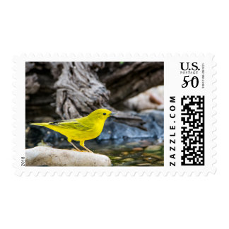 Yellow Warbler Postage Stamp
