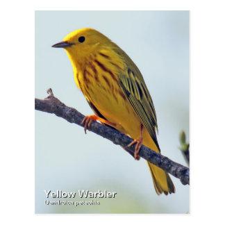 Yellow Warbler Postcard