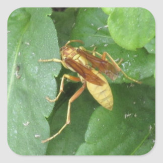 Yellow Wasp Straddling Leaves Stickers