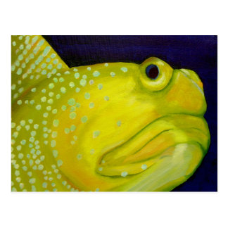 Yellow Watchman Goby Fish Postcard