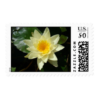 Yellow water lilly postage