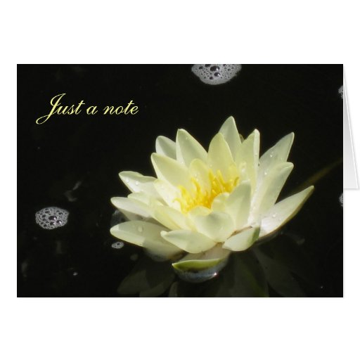 Yellow Water Lily Card