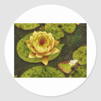 Yellow Water Lily Classic Round Sticker
