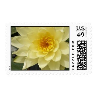 Yellow Water Lily Postage