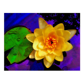YELLOW WATER LILY POSTCARD