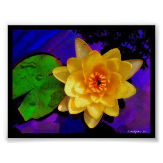 YELLOW WATER LILY ,          PRINT