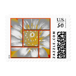 Yellow Water Lily Square Pattern Design Postage