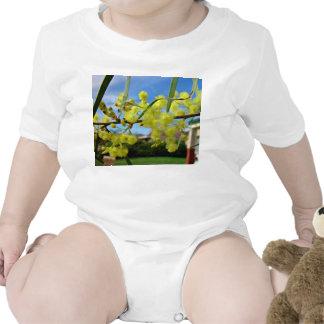 Yellow Wattle blossom against blue sky Tshirts