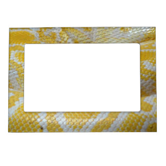 YELLOW WHITE BOA SNAKE SKIN TEXTURES REPTILES PATT MAGNETIC PICTURE FRAMES