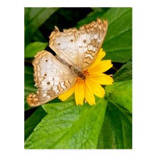 yellow white butterfly moth postcard