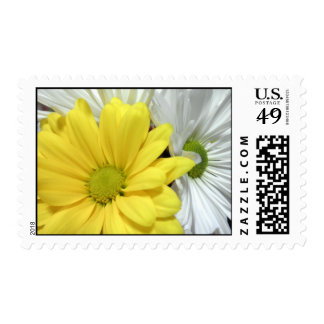 Yellow White Daisy Daisies Flower Flowers Photo Postage Stamp