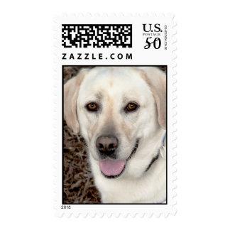 Yellow/White Labrador Postage Stamps