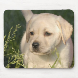 Yellow White Labrador Retriever Puppy Dog Mouse Pad
