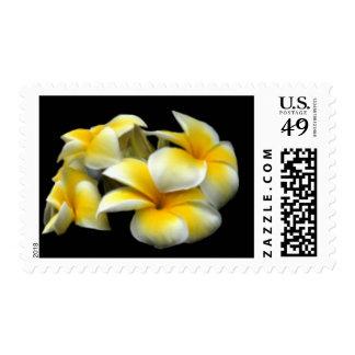 Yellow & White Plumeria Postage