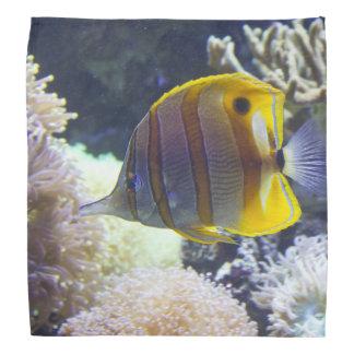 yellow & white Saltwater Copperband Butterflyfish Bandana