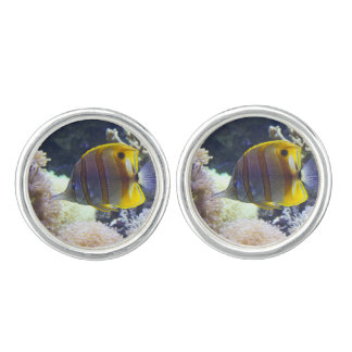 yellow & white Saltwater Copperband Butterflyfish Cufflinks