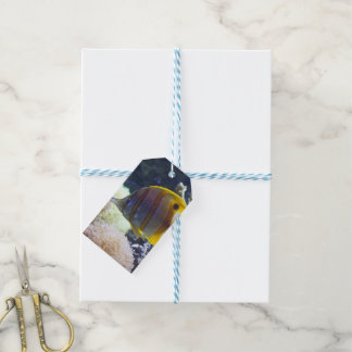 yellow & white Saltwater Copperband Butterflyfish Gift Tags