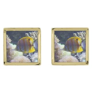yellow & white Saltwater Copperband Butterflyfish Gold Cufflinks
