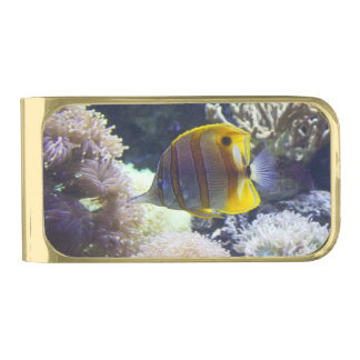 yellow & white Saltwater Copperband Butterflyfish Gold Finish Money Clip