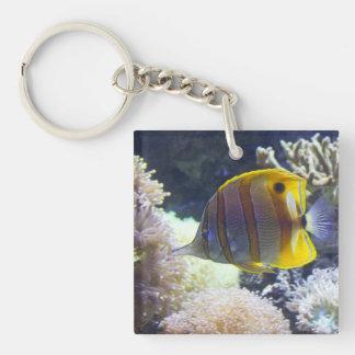 yellow & white Saltwater Copperband Butterflyfish Keychain