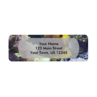 yellow & white Saltwater Copperband Butterflyfish Label