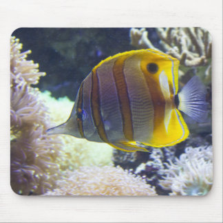 yellow & white Saltwater Copperband Butterflyfish Mouse Pads