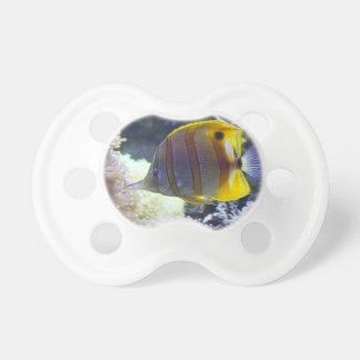 yellow & white Saltwater Copperband Butterflyfish Pacifier