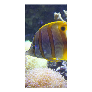 yellow & white Saltwater Copperband Butterflyfish Photo Greeting Card