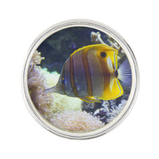 yellow & white Saltwater Copperband Butterflyfish Pin