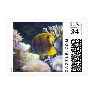 yellow & white Saltwater Copperband Butterflyfish Postage