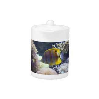 yellow & white Saltwater Copperband Butterflyfish