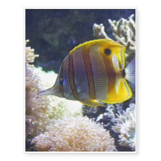 yellow & white Saltwater Copperband Butterflyfish Temporary Tattoos