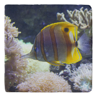 yellow & white Saltwater Copperband Butterflyfish Trivet