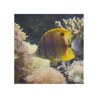yellow & white Saltwater Copperband Butterflyfish Wood Wall Art